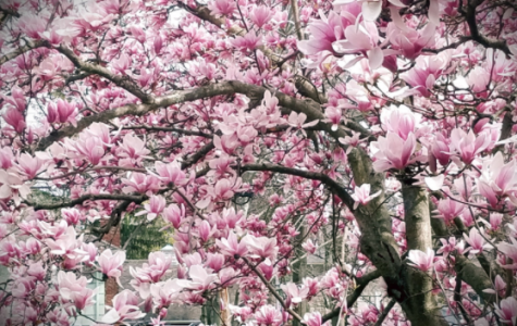 Majestic Magnolia by Jackie Mobus