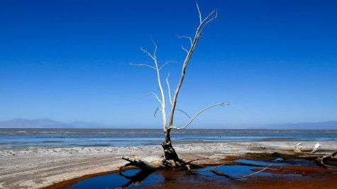 A Salton Sea