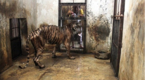 Zoos around the world: The Surabaya Zoo